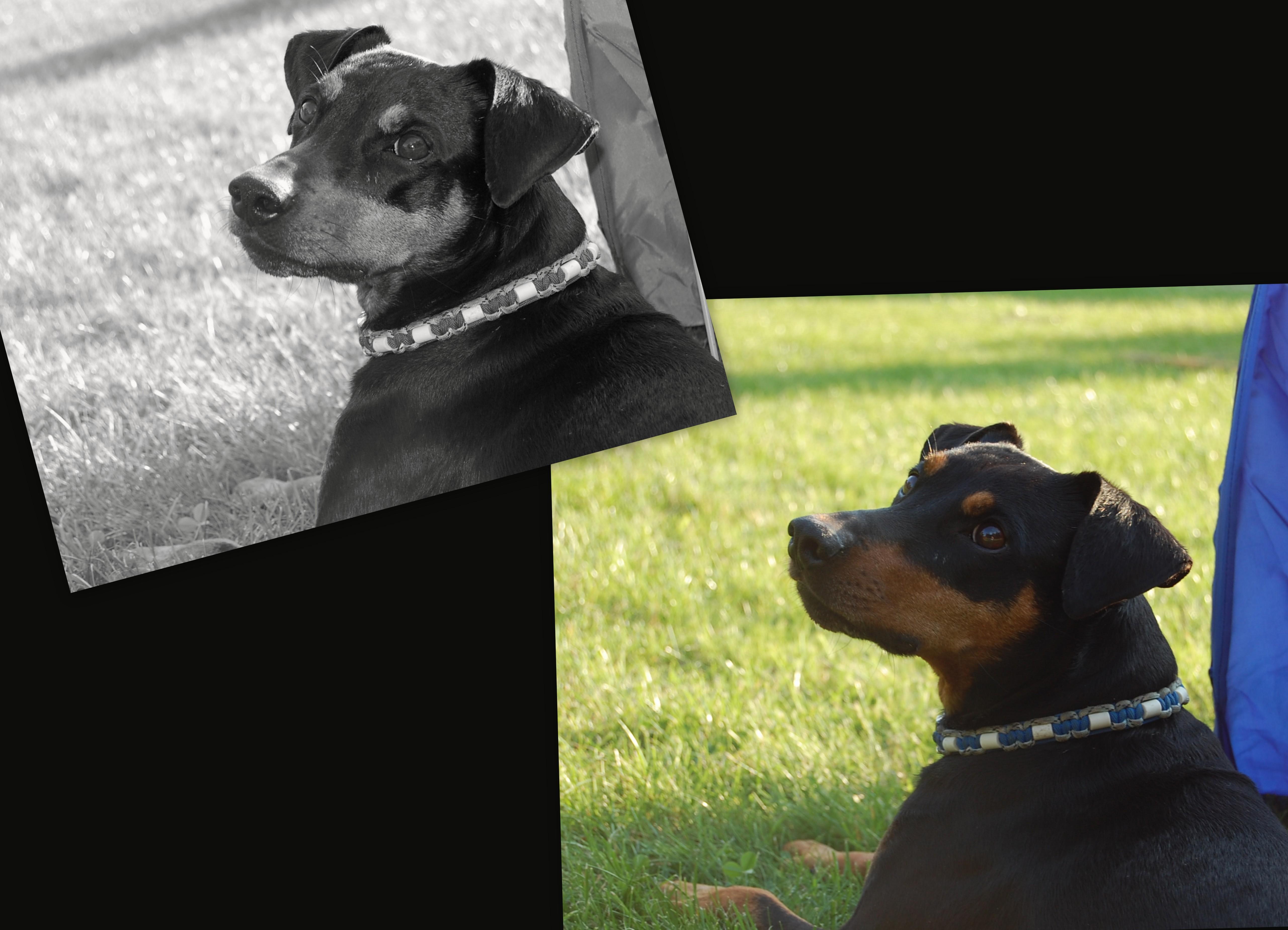 Hunde-August-20172