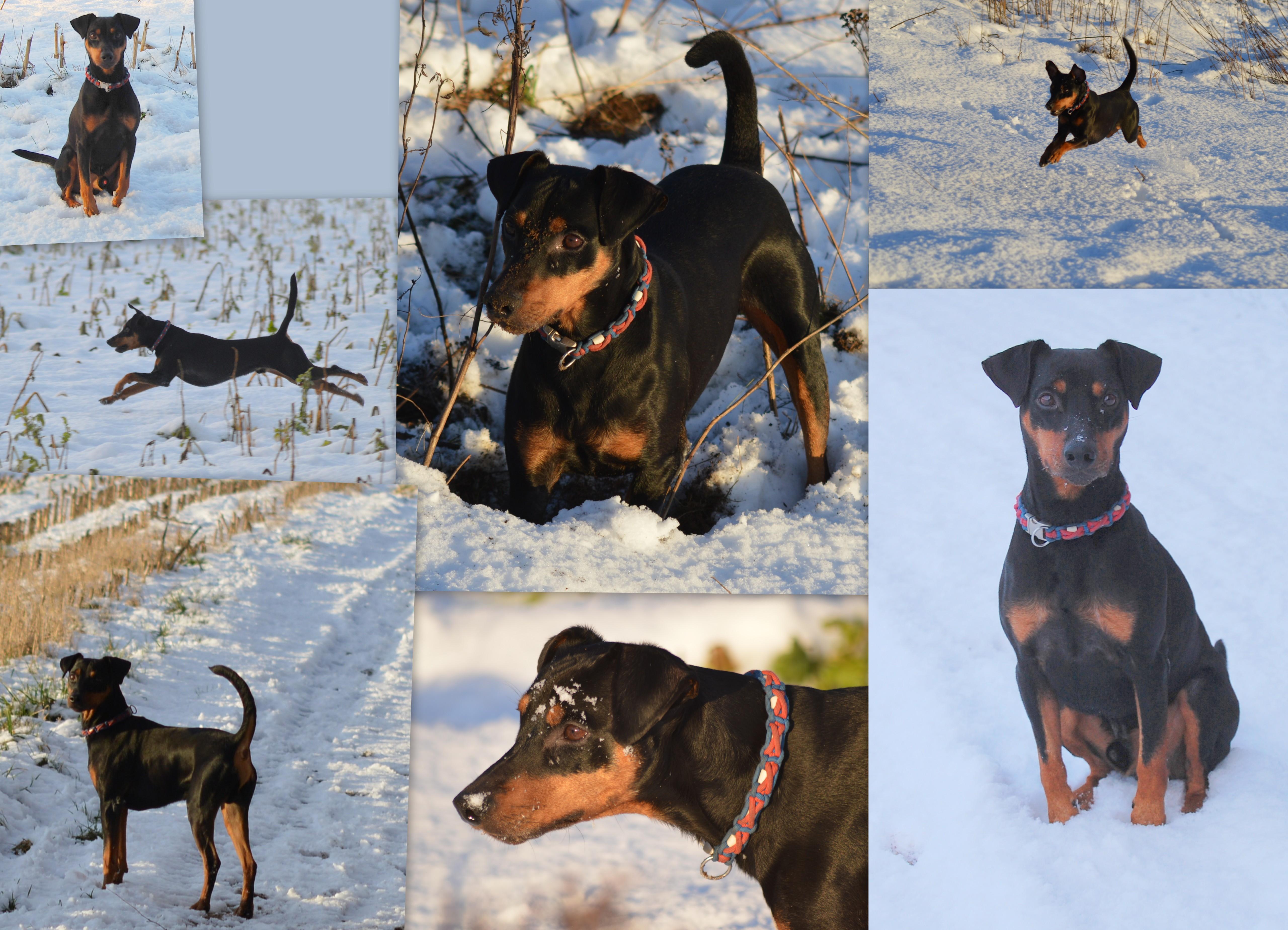 Hunde-Januar-171