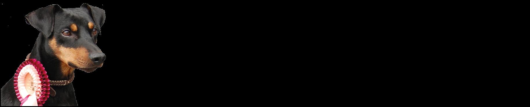 Pinscher vom Stiepelsberg